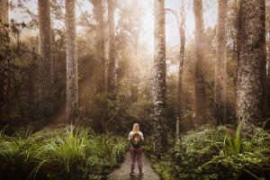 Kaha Kauri - The beautiful Kauri trees in Puketi Forest from my travels through New Zealand 2017